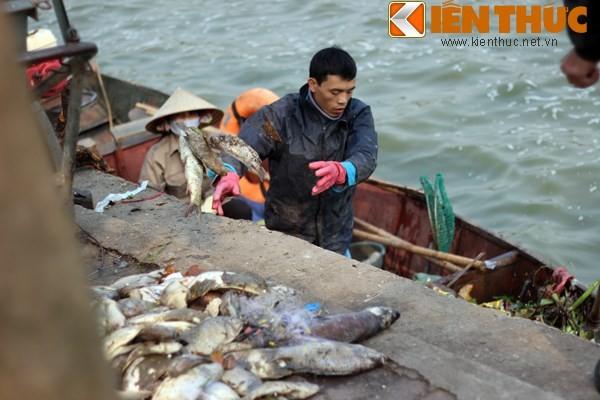 Cá chết hàng loạt, chất đống ở hồ Tây ảnh 6