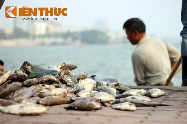 Cá chết hàng loạt, chất đống ở hồ Tây ảnh 7