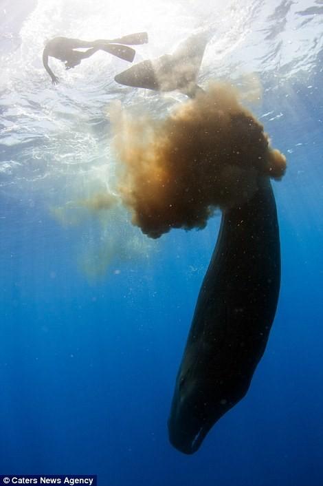 Thợ lặn hết hồn vì cá nhà táng 'phóng bom' ảnh 3