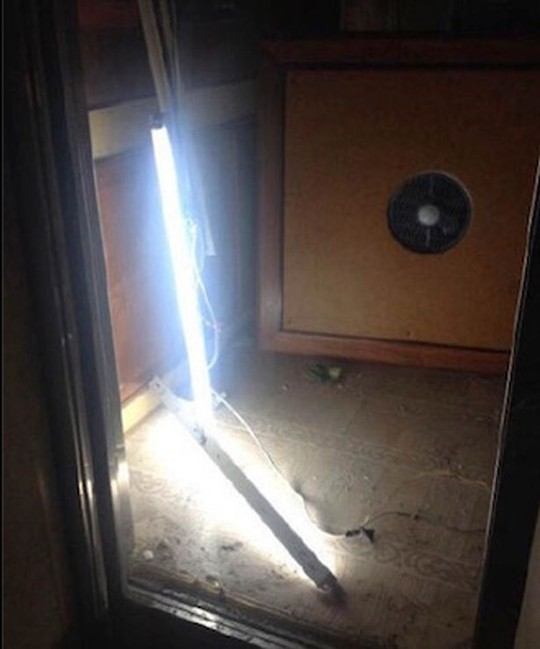 Hoảng loạn vì thang máy rơi tự do từ tầng 12 ảnh 2