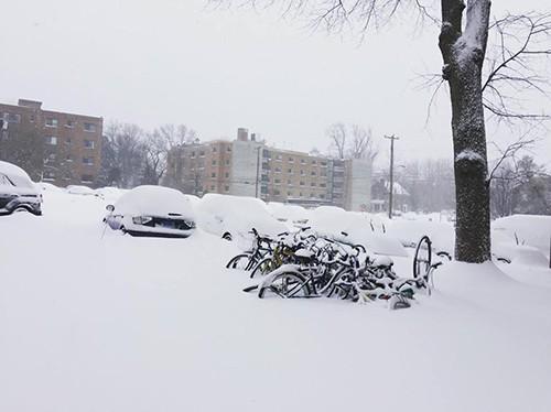 Người Việt ở Mỹ trong bão tuyết lịch sử ảnh 1