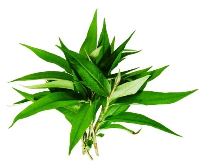 9 loại cây trồng trong nhà làm gia vị và thuốc chữa bệnh ảnh 3