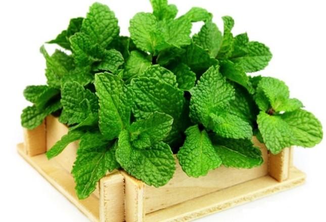 9 loại cây trồng trong nhà làm gia vị và thuốc chữa bệnh ảnh 6