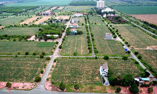 Nhơn Trạch: Tàn tích của siêu đô thị sau những tin đồn ảnh 1