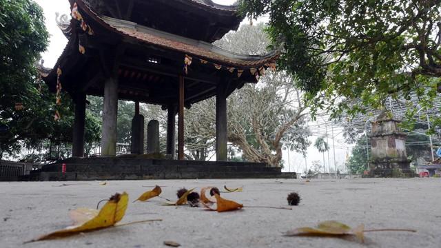 Bên trong rừng phong lá đỏ cổ thụ gần Hà Nội ảnh 10