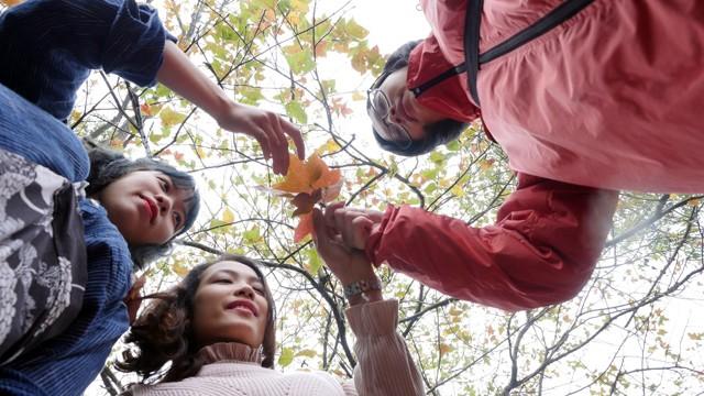 Bên trong rừng phong lá đỏ cổ thụ gần Hà Nội ảnh 14