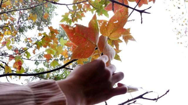 Bên trong rừng phong lá đỏ cổ thụ gần Hà Nội ảnh 8