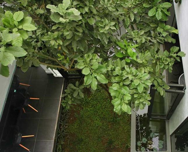 Khuôn viên xanh mát trong lòng nhà hình hộp ở Hải Phòng ảnh 6