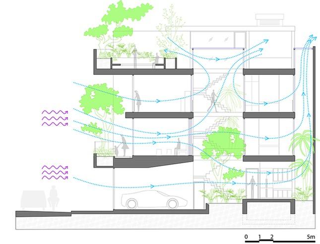 Nhà phố giống như ốc đảo xanh ở Nha Trang ảnh 19
