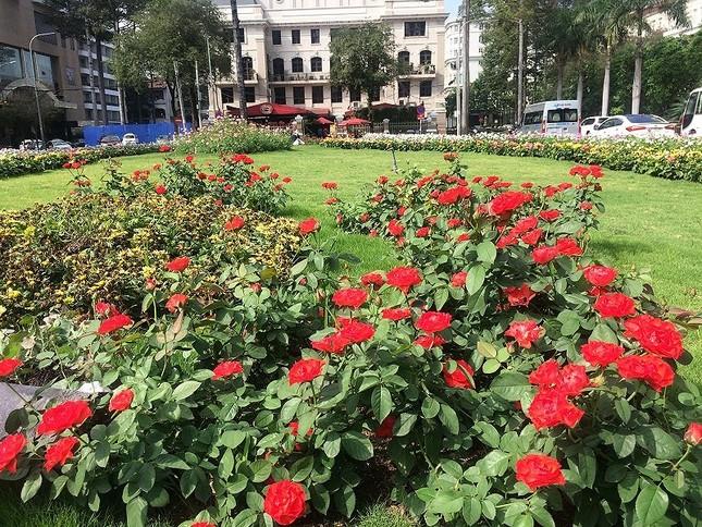 Bãi xe 'khủng' giờ thành công viên hoa ảnh 2
