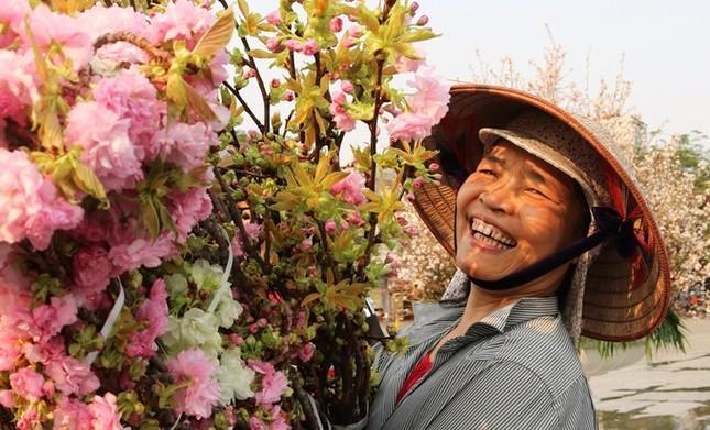 Hoa anh đào Nhật Bản làm say lòng người dân Hải Phòng ảnh 5