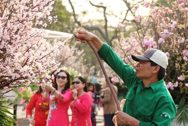 Hoa anh đào Nhật Bản làm say lòng người dân Hải Phòng ảnh 6