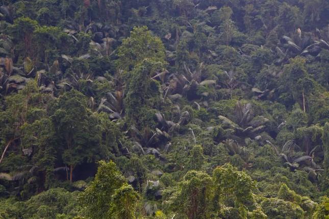 Cuộc sống săn bắt, hái lượm như người nguyên thủy ở bộ tộc kỳ lạ nhất Việt Nam ảnh 3
