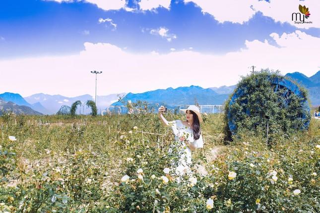 'Thung lũng hoa hồng lớn nhất Việt Nam' ở Sa Pa ảnh 1