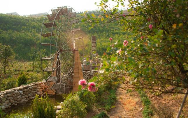 'Thung lũng hoa hồng lớn nhất Việt Nam' ở Sa Pa ảnh 2