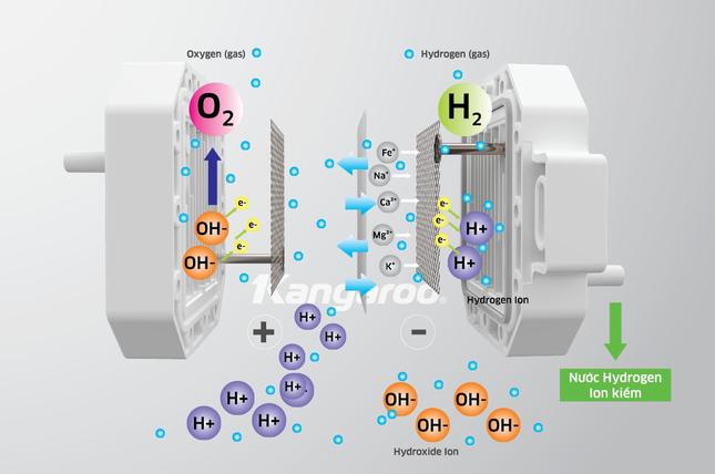 Nhà khoa học nói về công nghệ độc quyền tạo nước Hydrogen ion kiềm của Kangaroo ảnh 1