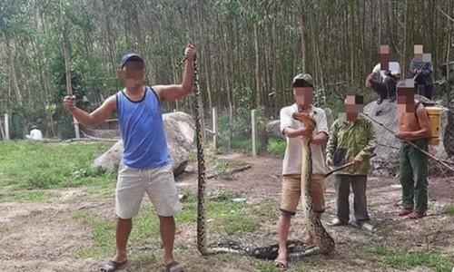 Tá hỏa trăn 22 kg nuốt nguyên con dê 25 kg ở Quảng Nam ảnh 1