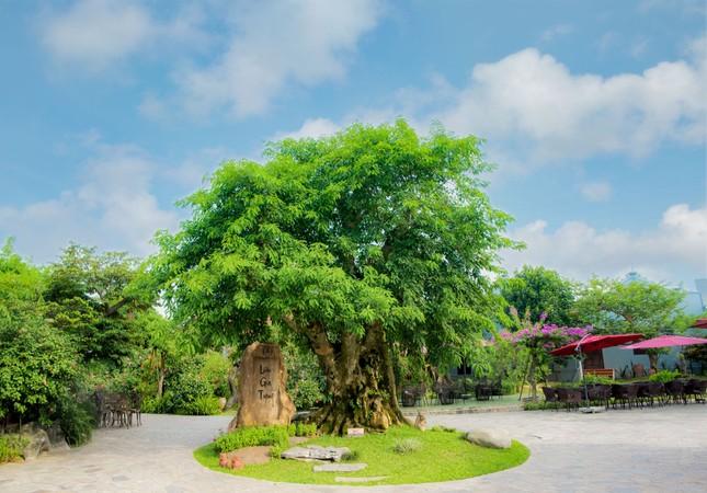Lưu Gia Trang, điểm check-in đẹp như mơ ở Nam Định ảnh 1