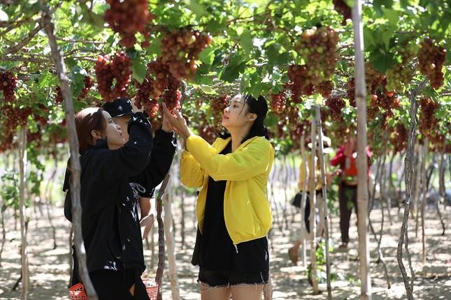 Ninh Thuận vào nhóm các địa phương tăng trưởng kinh tế cao nhất nước ảnh 3