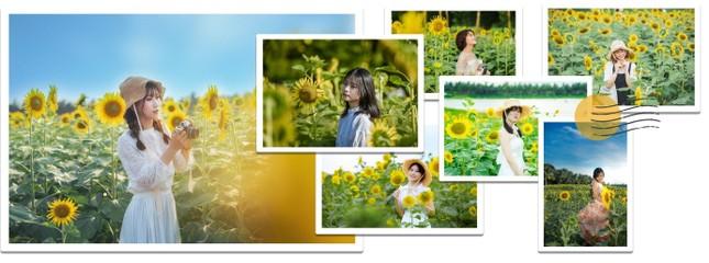 Rủ nhau check in đồi hoa mặt trời tại Ecopark ảnh 10