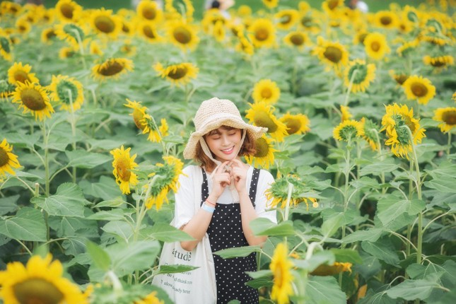 Rủ nhau check in đồi hoa mặt trời tại Ecopark ảnh 12
