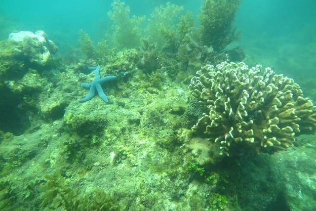 KDI Holdings đầu tư 15 tỷ đồng tái sinh san hô tại Nha Trang ảnh 2