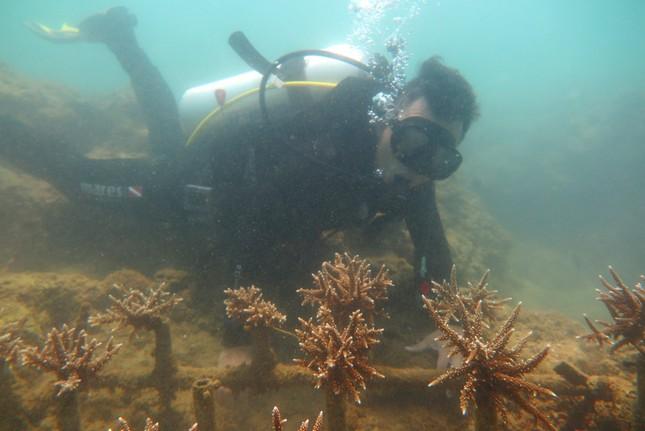 KDI Holdings đầu tư 15 tỷ đồng tái sinh san hô tại Nha Trang ảnh 3