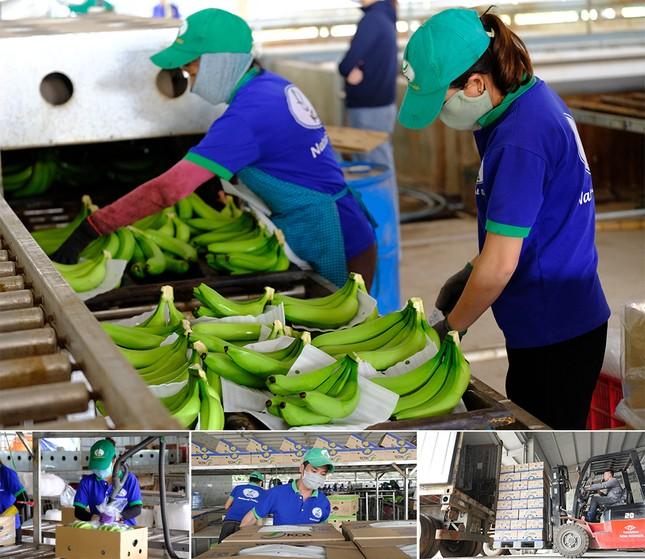 Dấu ấn nông nghiệp công nghệ cao của KDI Holdings tại Tây Nguyên ảnh 7