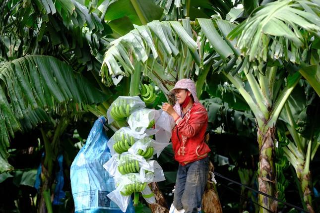 Dấu ấn nông nghiệp công nghệ cao của KDI Holdings tại Tây Nguyên ảnh 9
