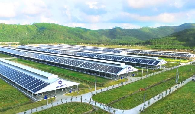 12 trang trại bò sữa 4.0 của Vinamilk đang được triển khai dùng năng lượng mặt trời ảnh 2