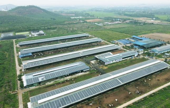 12 trang trại bò sữa 4.0 của Vinamilk đang được triển khai dùng năng lượng mặt trời ảnh 3