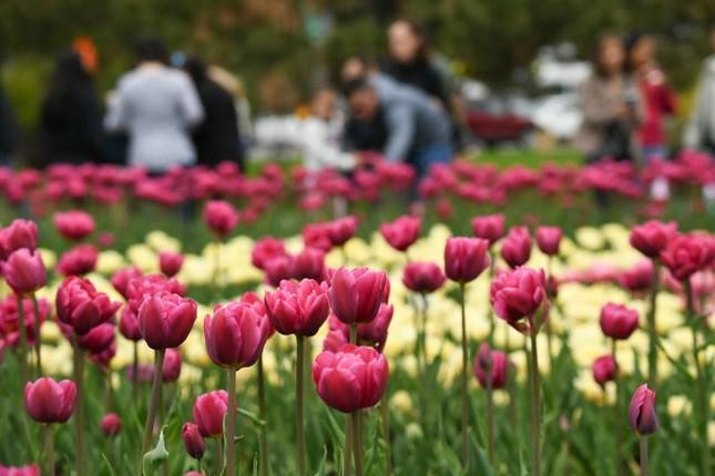Chiêm ngưỡng pháo hoa rực rỡ và Lễ hội hoa quy mô tại FLC Sầm Sơn ảnh 2