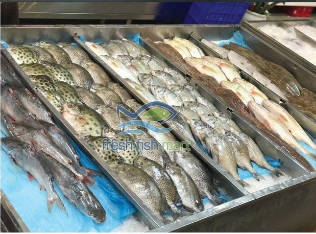 Siêu Thị Cá Sạch - Nơi mua hải sản hoàn hảo của mọi người ảnh 4