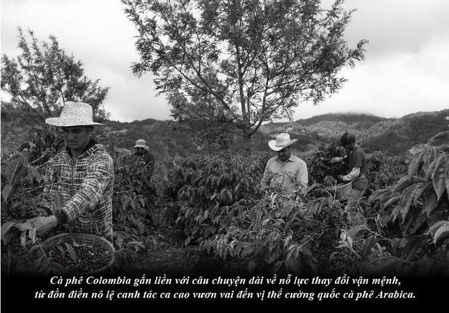 Kỳ 64: Hành trình khẳng định dấu ấn khác biệt của cà phê Colombia ảnh 2