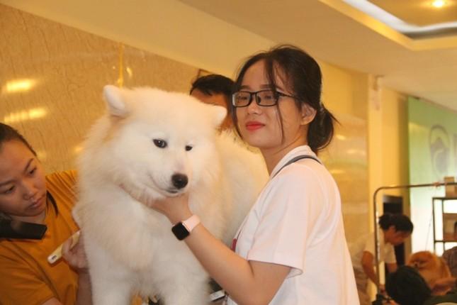 Hoa hậu Thái Lan dẫn thú cưng đến Việt Nam dự thi Hoa hậu chó ảnh 6