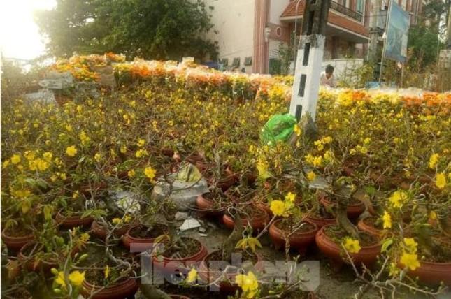 Mãn nhãn sắc Xuân trên đất Thủ ngày cận Tết ảnh 9