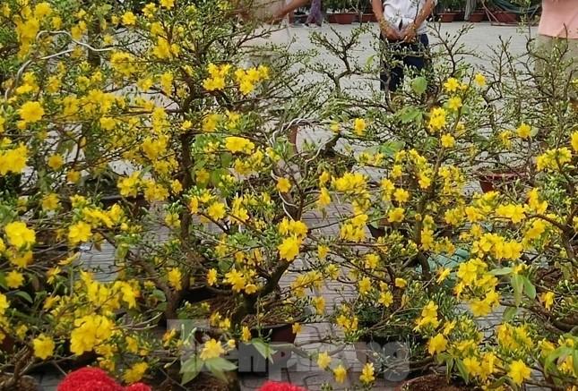 Mãn nhãn sắc Xuân trên đất Thủ ngày cận Tết ảnh 7