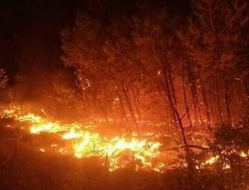 Vườn cây rộng 10.000m2 ở Bình Phước bị lửa thiêu rụi trong đêm ảnh 2