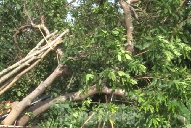 Bình Dương, Bình Phước mưa lớn làm hàng chục căn nhà bay mái, cột điện đổ sập ảnh 3