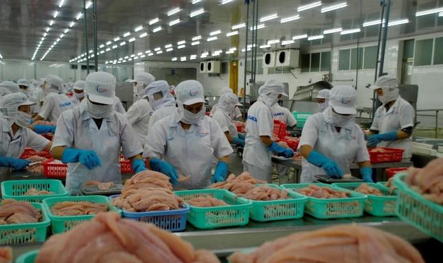 Mỹ trở lại là thị trường số 1 của xuất khẩu cá tra Việt Nam ảnh 1
