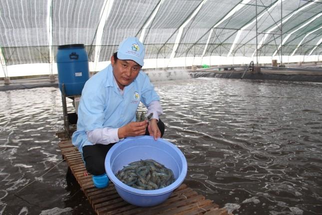 Xuất khẩu tôm sang Trung Quốc tăng mạnh nhất trong 5 năm qua ảnh 1