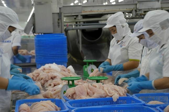 Trung Quốc trở lại là thị trường số 1 của xuất khẩu cá tra Việt Nam ảnh 1