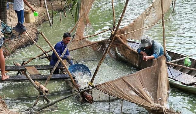 Mỹ giảm thuế chống bán phá giá cho cá tra Việt Nam ảnh 1