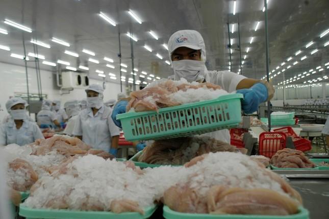 Mỹ giảm thuế chống bán phá giá cho cá tra Việt Nam ảnh 2