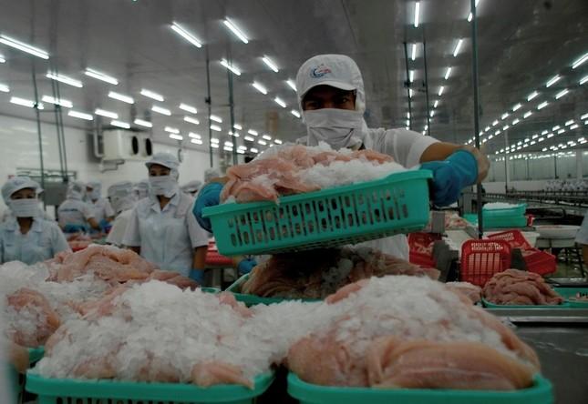 Xuất khẩu cá tra sang EU sẽ giảm kéo dài ảnh 1