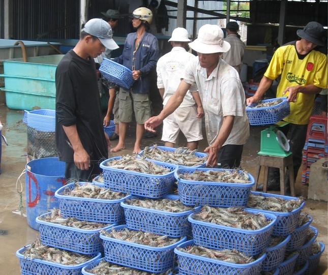 Xuất khẩu tôm sang Mỹ và Trung Quốc tăng trưởng khả quan ảnh 1