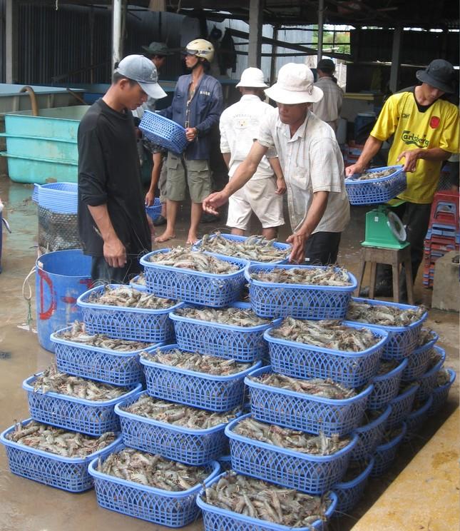 Mỹ trở thành thị trường số 1 của xuất khẩu tôm Việt Nam ảnh 1