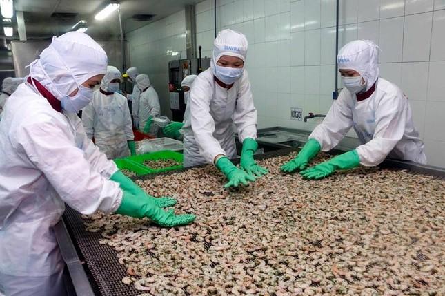 Xuất khẩu tôm sang EU kỳ vọng tăng trưởng nhờ hiệp định EVFTA ảnh 1