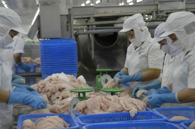 Đồng Tháp đưa cá tra ra Thủ đô Hà Nội tìm đường tiêu thụ ảnh 2