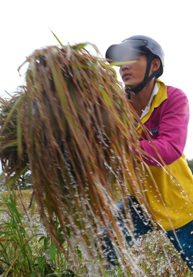 Hàng ngàn héc ta lúa và cây ăn trái bị ảnh hưởng do ngập úng ảnh 6